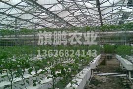 农产品种植高标准化智能温室
