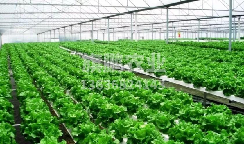 解决大棚蔬菜重茬病的主要措施