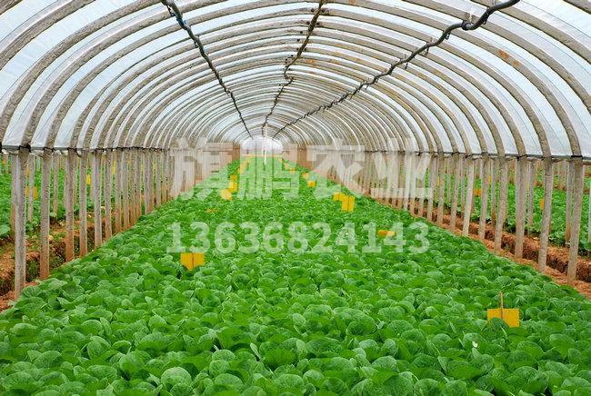 蔬菜温室大棚中光照缺乏的补救方法...